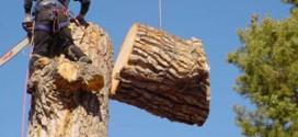 جلوگیری از مرگ و جراحت افراد شاغل در عملیات قطع درختان