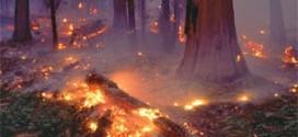 هشدار سازمان آتش نشانی و خدمات ایمنی ملایر به شهروندان