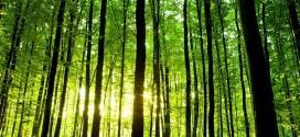 توصیه های ایمنی در خصوص جنگل